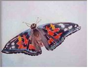 Butterfly at the EcoTarium- Painting by Lily Azerad-Goldman